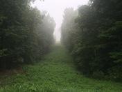 Early Foggy Morning Walk
