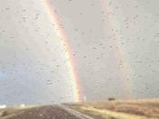 Vaugn Rainbow