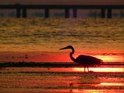 Fishing Til Sundown