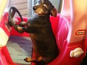 Tela, driving