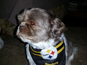 My Spoiled Steeler Pup.