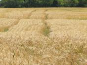 Harvest Tracks
