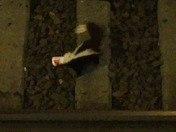 Skunk stuck on tracks.