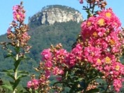 Pilot Mountain framed with crepe myrtle flowers