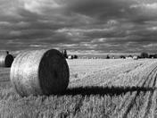 Steeles Avenue farm field
