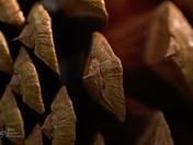 closeup cone