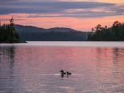 A Loon Sunrise