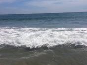 Shark in Cocoa Beach