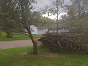 Middletown storm rips tree down