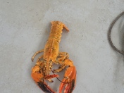 Unique lobsters