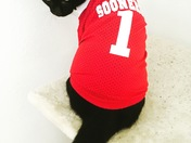 Game day kitty!