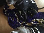 Doggies Game Day Ready