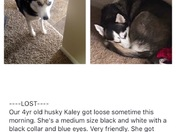 Soldiers Missing Dog Kaley