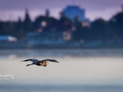 Heron and City Landscape