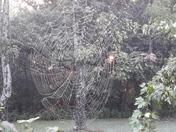 Sunrise Spiderweb
