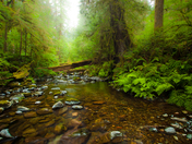 Goldstream River