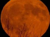 Harvest Moon 9. 16.16