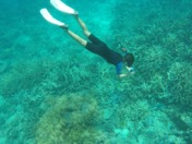Aleks snorkeling in the great barrier reef