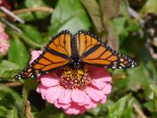 Autumn Butterfly