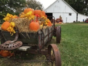 Pumpkin display from Alldredge Orchards
