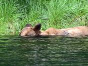 Submarine Bear !