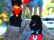Super Poodles