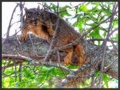 Inquisitive Squirrel