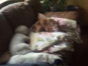 Dog storm slumber party