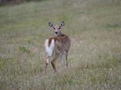 Deer likes to be my model
