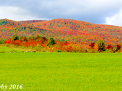 Fall 2016 foliage