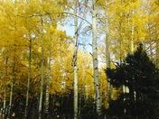 Fall in NM