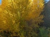 Autumn in Santa Fe