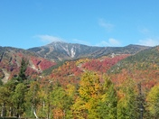 Whiteface Foliage
