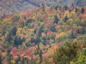 Foliage Shots