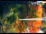 A Fall Swim
