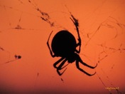 October spider