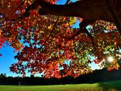 Fall colors at the sunrise.