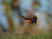 Catchin' air