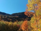 Grafton Notch Yo Average Leaves