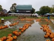 Schuett Farms Pumpkins Mukwonago