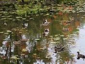 Flora, Fauna, in Fall