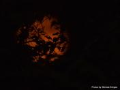 Blood Moon 10 17 16
