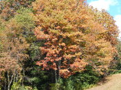 Autumn awakes in Alleghany County, NC