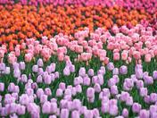 Colourful Festival..