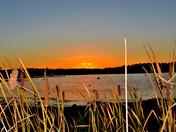 Cattails at Canobie Lake