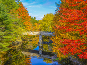 Foliage in Naples Maine