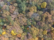 Trees from a Drone