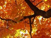 Fall foliage in Gilford NH