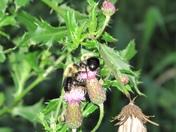 Greedy Nectar