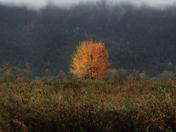 Beneath Autumn